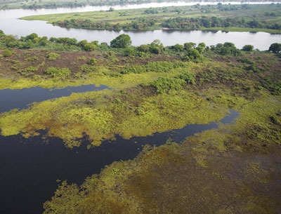 An aerial shot of the wetlands