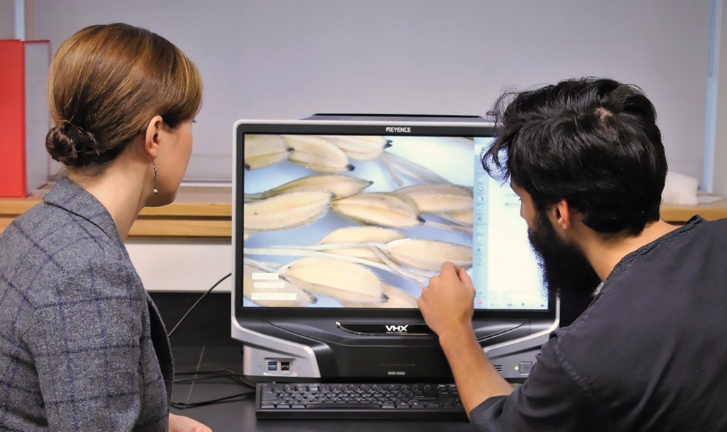 Two people viewing magnified rice grains on a screen