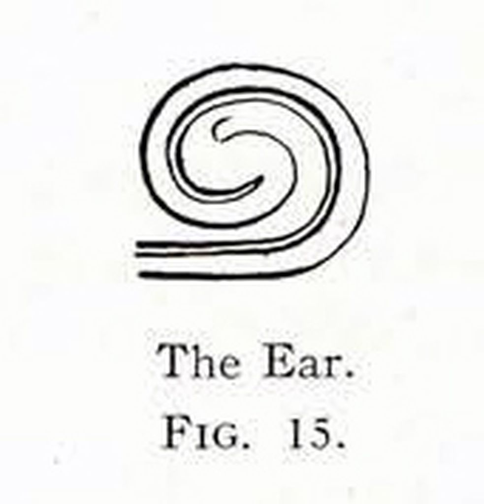 Drawing of a design showing a stylized ear