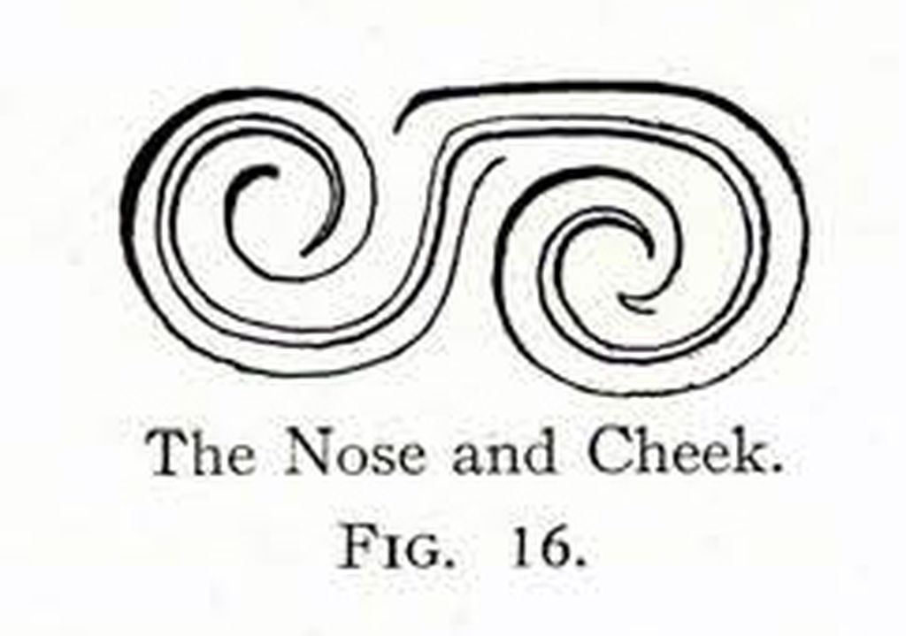 Drawing of a design showing a stylized nose and cheek